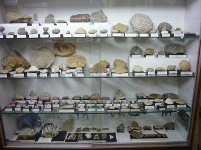 G-paleontologia.JPG
